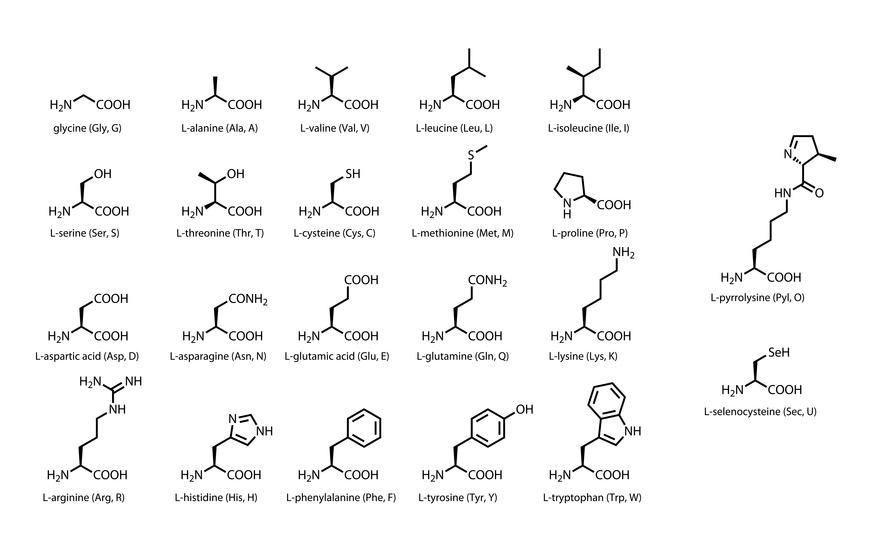Proteinogene Aminosäuren: Wirkung, Nebenwirkungen, Dosierung